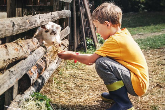 kind met geit