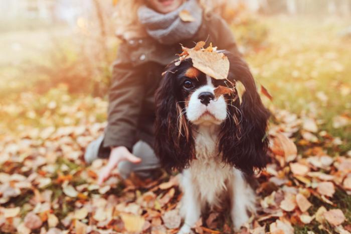 hond in de herfst