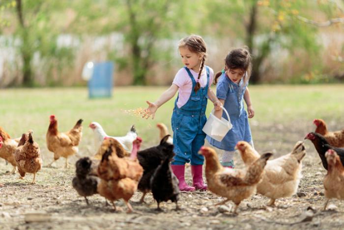 kinderen spelen met kippen